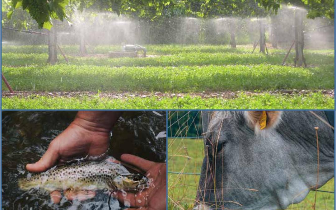 Coordinamento delle attività di supporto alla definizione del Piano Strategico Nazionale (Regolamento PAC 2021-2027) e analisi economica dei Piani di gestione delle acque (Direttiva 2000/60/CE)